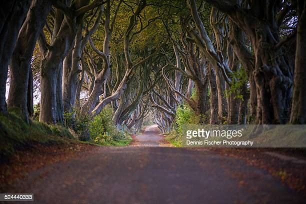 Road through The Dark Hedges
