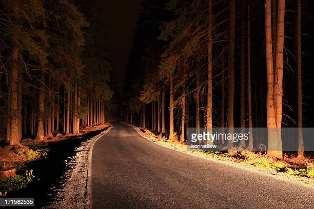 Route à travers la forêt illuminée par les lumières de la voiture