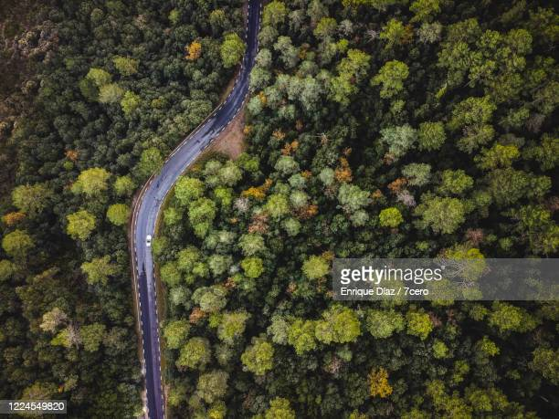 road through the forest - twisted stock pictures, royalty-free photos & images