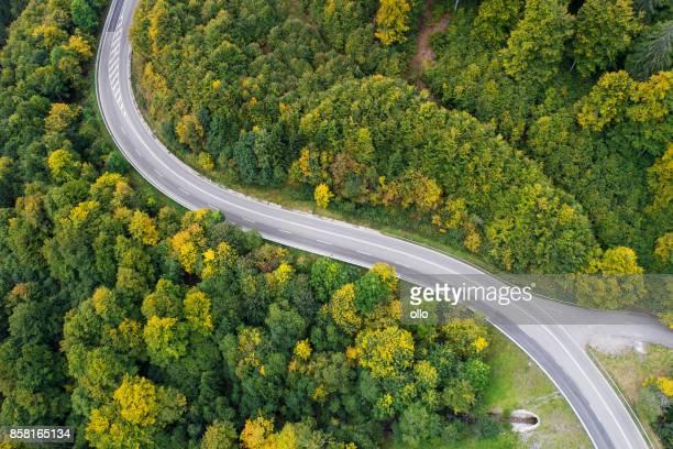 estrada através da floresta  - árvore de folha caduca - fotografias e filmes do acervo