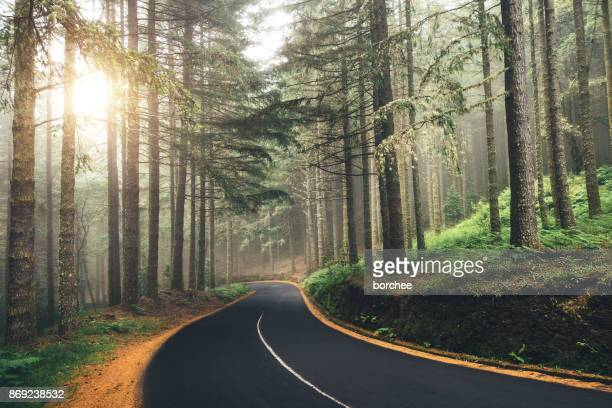 road through the forest - wonderlust stock photos and pictures