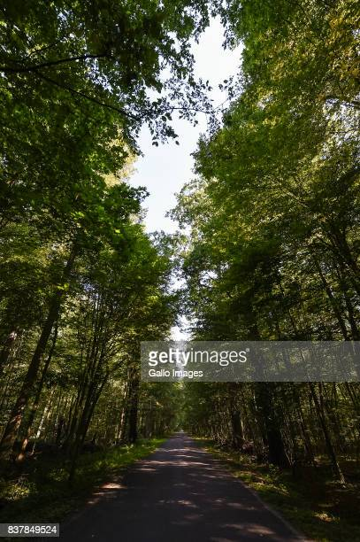 Road through the forest seen on August 09 2017 in Podlaskie Voivodeship Poland The Bialowieza National Park is best known for the protection of the...