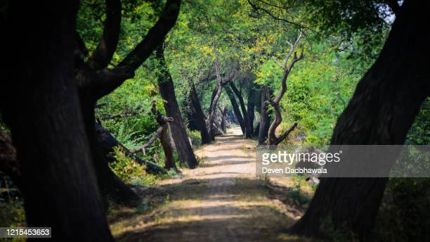 road through the forrest - wildlife reserve stock pictures, royalty-free photos & images