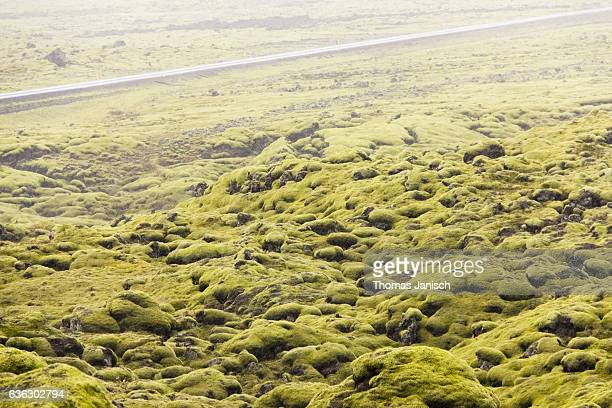 Road through the green moss landscape