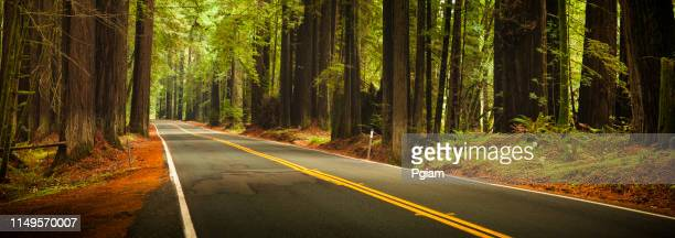 road through the huge panoramic redwood trees - state park stock pictures, royalty-free photos & images