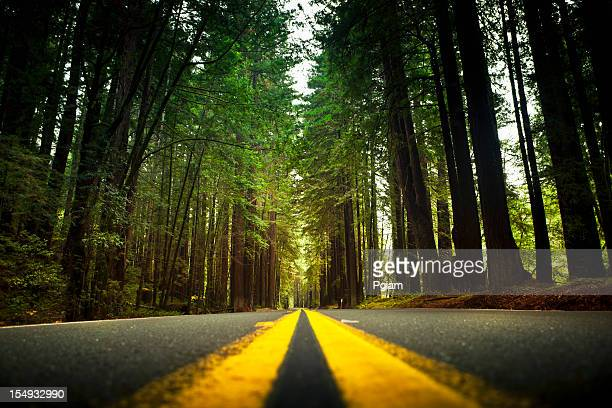 road through the huge redwood trees - humboldt redwoods state park stock photos and pictures