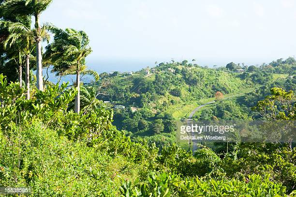road through the jungle - tobago stock pictures, royalty-free photos & images