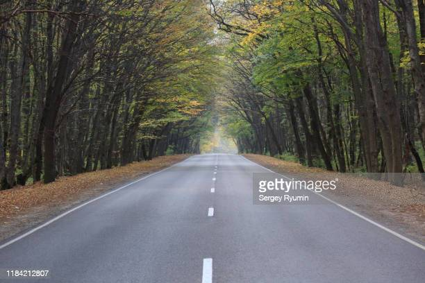 road through the morning autumn forest - straight stock pictures, royalty-free photos & images
