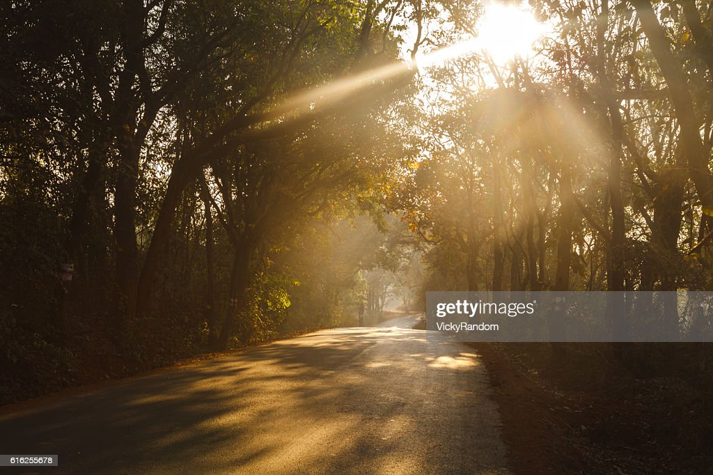 road through the morning forest : Foto de stock