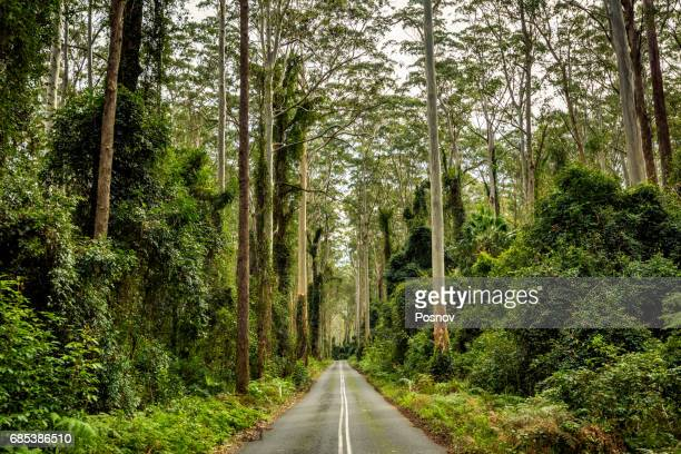 Road through the tall forest in Murramarang National Park, New South Wales