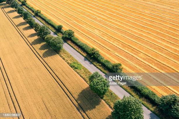 road through wheat fields. one side has been harvested already - strip stock pictures, royalty-free photos & images
