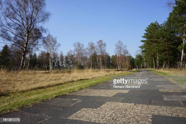 A road through woods and heathland at the site of the former BergenBelsen German Nazi concentration camp in Lower Saxony Germany 2014 The site is now...