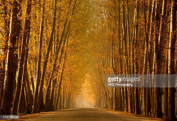 road to heaven - kashmir valley stock photos and pictures