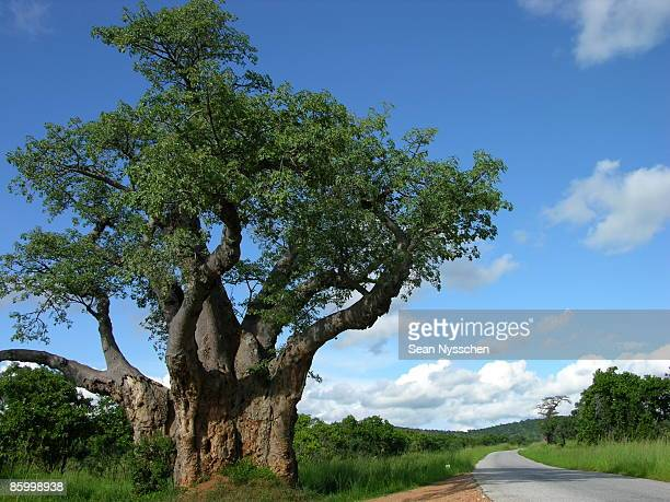 Road to Nowhere and Baobab Tree