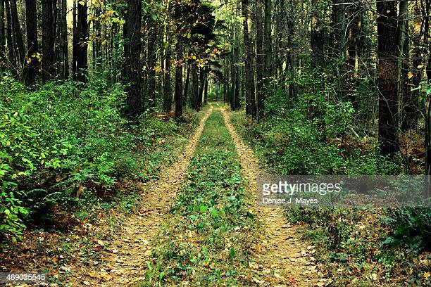 Road to Nowhere in the Forest