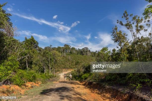 road to rain forest at bario, sarawak - shaifulzamri fotografías e imágenes de stock