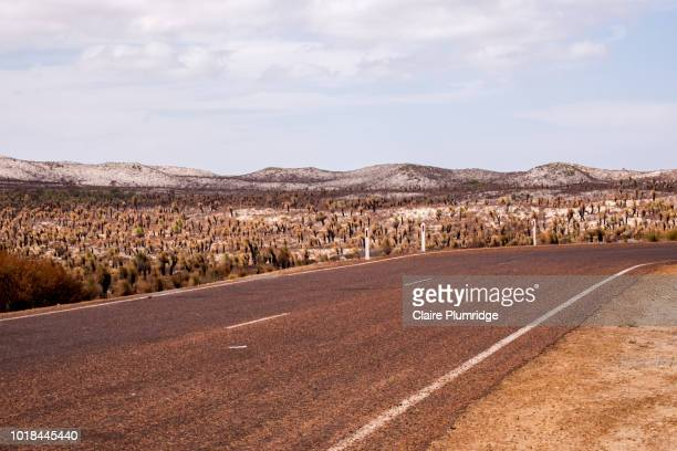 road to the pinnacles, cervantes, western australia - claire plumridge stock pictures, royalty-free photos & images