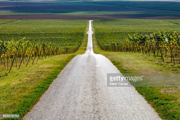 road trought the vineayrd - 散歩道 ストックフォトと画像