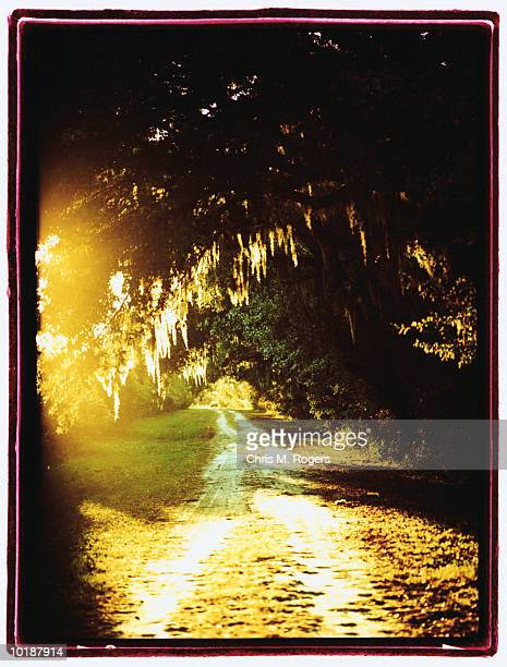 road under spanish moss, south carolina (cross-processed) - cross processed stock pictures, royalty-free photos & images