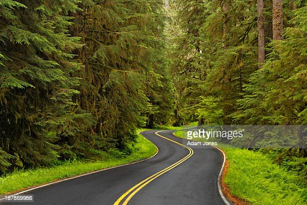 road winding through lush forest - olympic park stock pictures, royalty-free photos & images