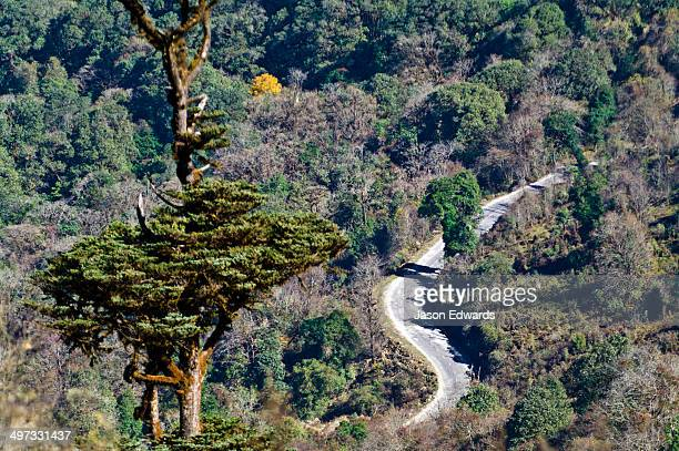 A road winds through a forested mountain pass in the Himalaya.