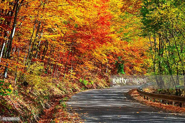 Road winds through autumn forest, Slovakia
