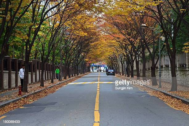 road with autumn foliage - sungjin kim stock pictures, royalty-free photos & images