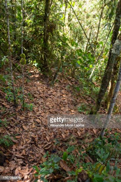 road with dry leaves going to the golondrinas waterfalls, belmira protected natural area - colombia stock pictures, royalty-free photos & images