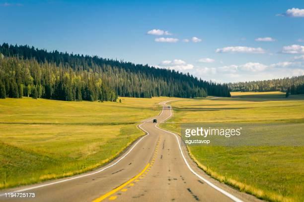カイバブの松を持つ道路はグランドキャニオンノースリムに - アリゾナ州、米国 - 台地 ストックフォトと画像