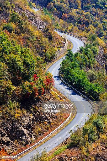 Road with Maple Leaves