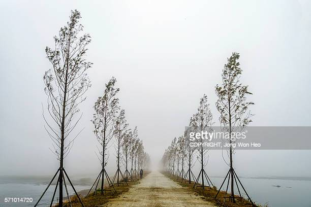 A road with metasequoia trees in the middle of the lake