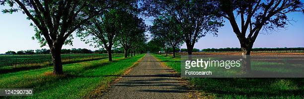 road with oak trees - boone hall plantation stock pictures, royalty-free photos & images