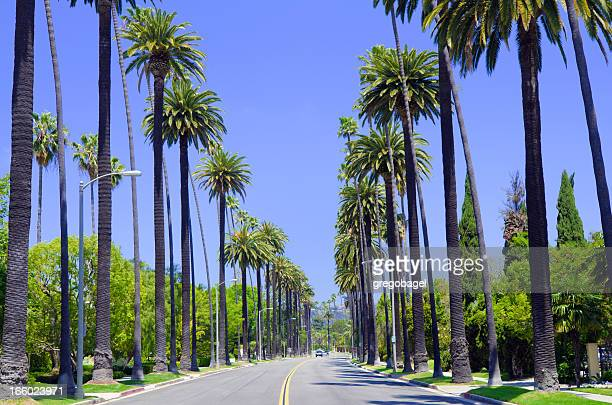 straße mit palmen in los angeles county - santa monica stock-fotos und bilder