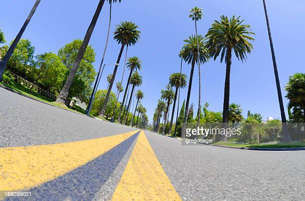 road with palm trees in los angeles county - beverly hills california stock photos and pictures