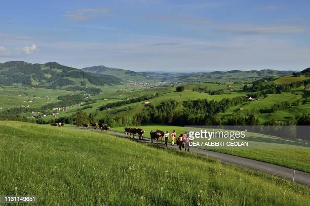 Road with shepherds and cattle, Appenzell, Canton of Appenzell Innerrhoden, Switzerland.