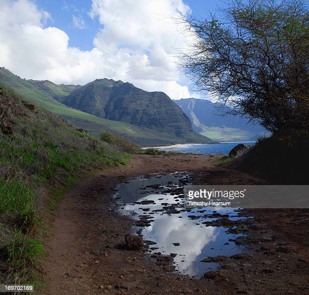 road with sky reflected in puddle - timothy hearsum stock photos and pictures