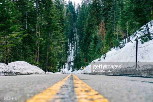 road with snow and pine trees - kieferngewächse stock-fotos und bilder