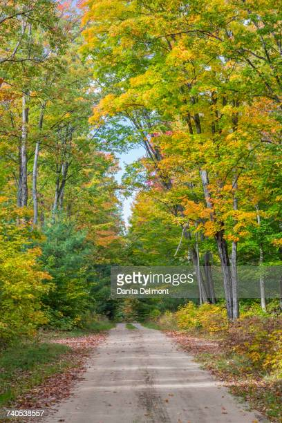 road with trees in fall color, hiawatha national forest, upper peninsula, michigan, usa - hiawatha national forest stock pictures, royalty-free photos & images