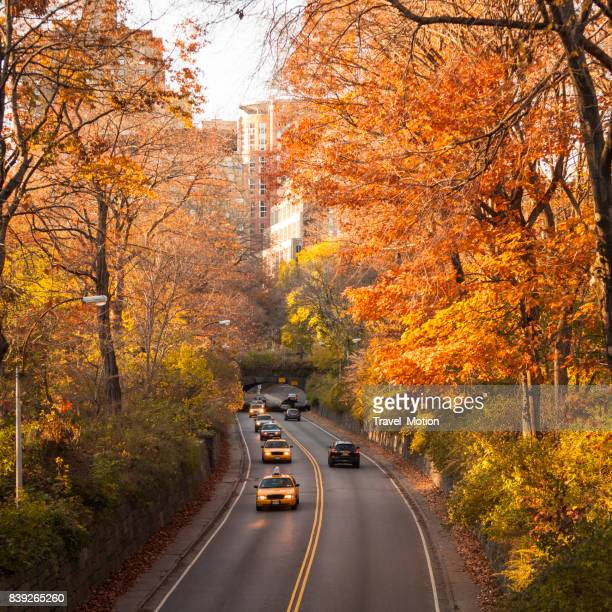 Weg met gele taxi's in Central Park, Manhattan, New York City