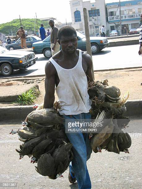 A roadside chicken vendor hawks his chickens 25 December 2003 on Christmas day on Lagos Ikorodu highway Nigerian celebrate bleak christmas as prices...