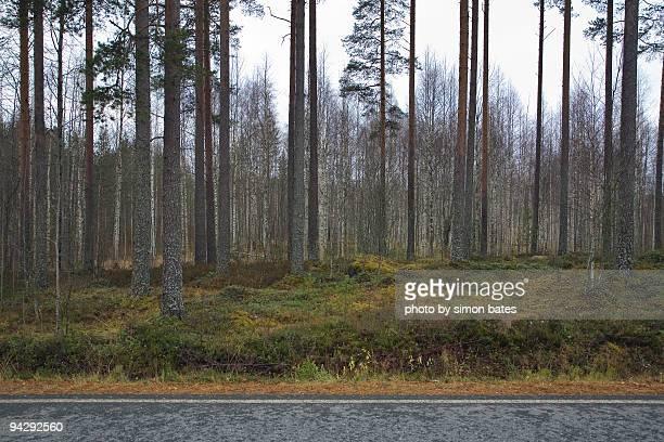 Roadside forest scene