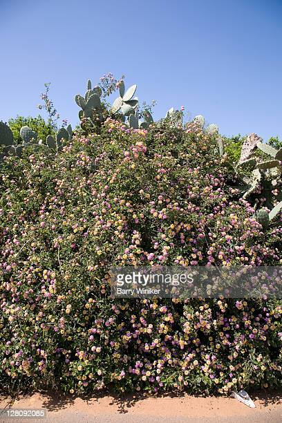 roadside plantings in spring, ra'anana, israel - sharon plain stock pictures, royalty-free photos & images