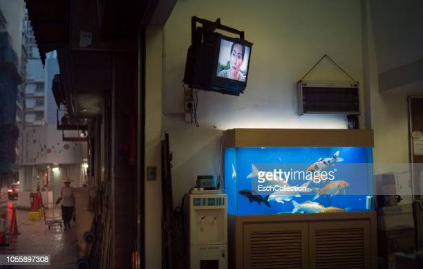 roadside trading shop with aquarium and television, hong kong - television show stock pictures, royalty-free photos & images