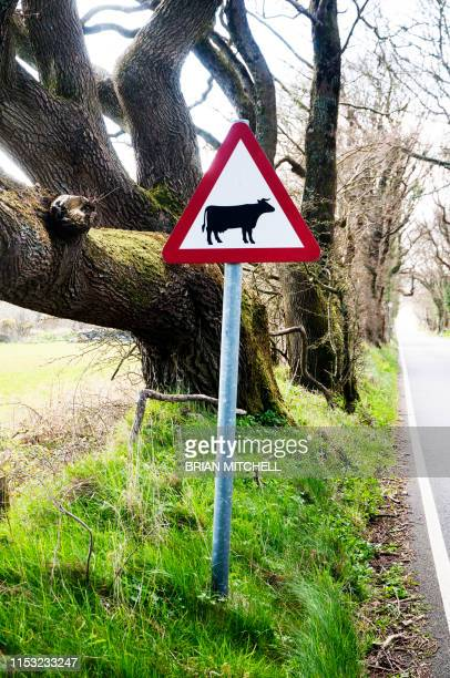 roadside traffic warning sighn, beware of cattle - image stock pictures, royalty-free photos & images