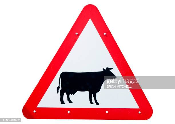 roadside traffic warning sighn, beware of cattle. - female animal stock pictures, royalty-free photos & images