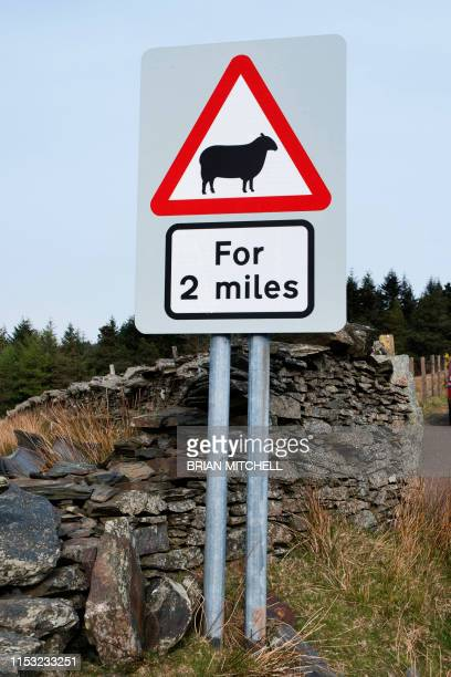 roadside traffic warning sighn, beware of sheep - image stock pictures, royalty-free photos & images
