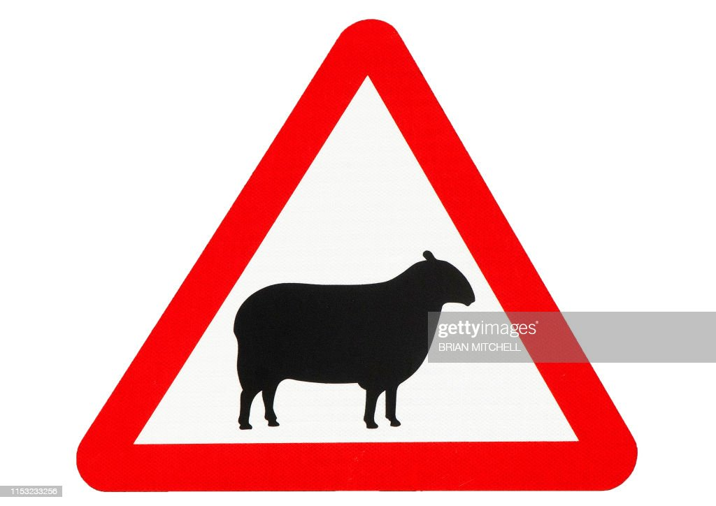 Roadside traffic warning sighn, beware of sheep : Stock Photo
