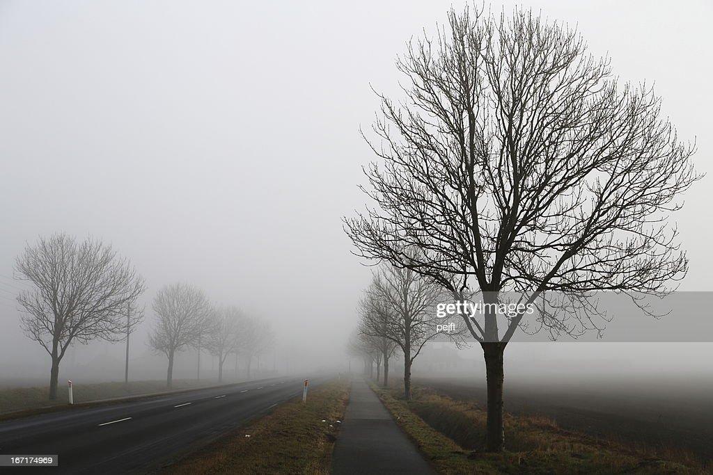 Roadside tree on a very foggy day : Stock Photo