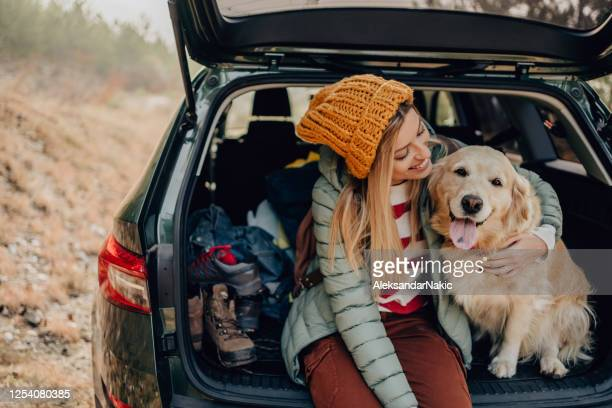 roadtrippers - pets stock pictures, royalty-free photos & images