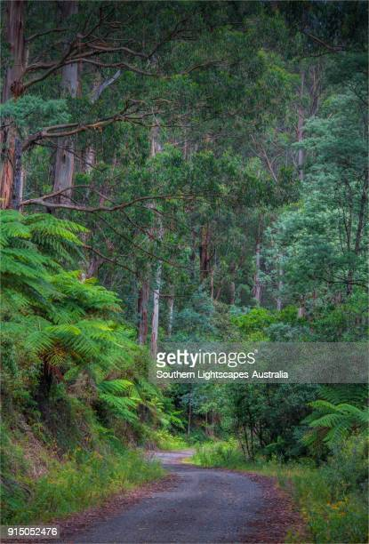 Roadway into Tarra Bulga National Park, South Gippsland, Victoria.